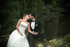 Красивые пары свадьбы сидя в древесинах стоковая фотография rf