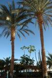 Красивые пальмы на предпосылке Красного Моря Стоковое Фото