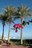 Красивые пальмы на предпосылке Красного Моря Стоковые Изображения RF
