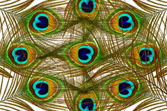 Красивые пер павлина как предпосылка Стоковое фото RF