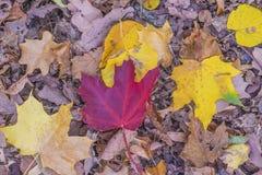 Красивые пестротканые листья осени стоковые фотографии rf