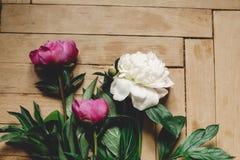 Красивые пионы пинка и белых на деревенском деревянном поле, плоском положении Флористическое оформление и расположение : Сельски стоковые изображения rf
