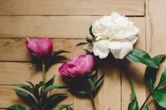 Красивые пионы пинка и белых на деревенском деревянном поле, плоском положении Флористическое оформление и расположение : Сельски стоковая фотография