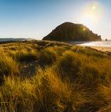Красивые пляж и дюны с золотой травой во время захода солнца стоковая фотография rf