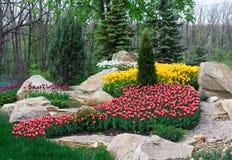 Красивые 2 покрасили, красный и белый flowerbed тюльпанов Стоковая Фотография RF