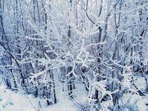 Красивые покрытые снег ветви дерева в пасмурной морозной погоде стоковое изображение