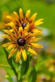 Красивые полевые цветки в солнечном дне стоковые фото