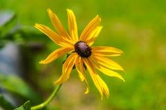 Красивые полевые цветки в солнечном дне стоковое изображение