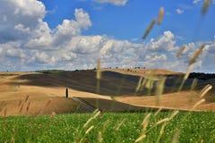 """Красивые поля Toscana в Сан Quirico d """"Orcia стоковое фото"""