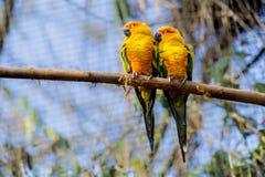 Красивые попугаи на деревянном хоботе с зеленой предпосылкой вегетации стоковое изображение