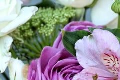 Красивые полевые цветки вверх закрывают Стоковое Изображение RF