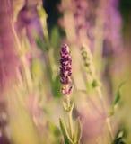 Красивые полевые цветки стоковые фотографии rf