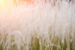 Красивые поля травы на цвете захода солнца стоковая фотография rf