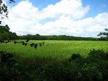 Красивые поля хорошей надежды стоковая фотография