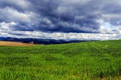 Красивые поля Стоковая Фотография