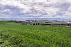 Красивые поля Стоковое Фото