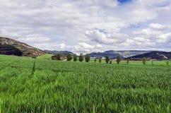 Красивые поля Стоковая Фотография RF