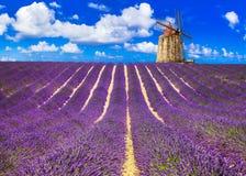 Красивые поля lavander с ветрянкой Provance, Франция стоковые фотографии rf