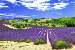 Красивые поля lavander, Provane, Стоковая Фотография RF