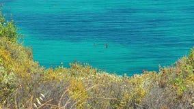 Красивые природа морской воды и концепция праздника сток-видео