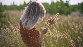 Красивые прогулки молодой женщины в поле собирают букет цветков и колосков Портрет привлекательной женщины на траве на su видеоматериал
