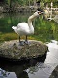 Красивые птицы в мире природы Стоковое Изображение