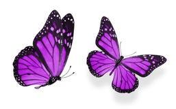 Красивые 2 пурпурных бабочки изолированной на белой предпосылке стоковое фото rf