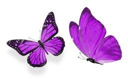 Красивые 2 пурпурных бабочки изолированной на белой предпосылке стоковая фотография