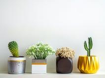 Красивые различные геометрические конкретные плантаторы с кактусом, цветками и суккулентным заводом Покрашенные конкретные баки д стоковое фото rf