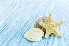 Красивые различные морские объекты на голубых деревянных досках Стоковая Фотография RF