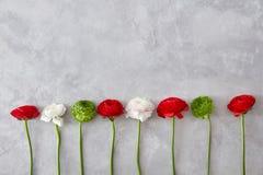 Красивые различные цветки на серой предпосылке Стоковые Фото