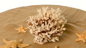 Красивые раковины и коралл на песке против, белизна, rotatiion сток-видео