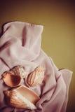 Красивые раковины на белом silk drapery Стоковые Фотографии RF