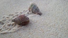 Красивые раковины на пляже с белым песком стоковые фотографии rf