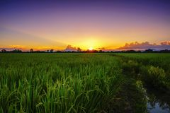 Красивые рисовые поля и рис земледелия ландшафта обрабатывают землю на заходе солнца стоковое изображение