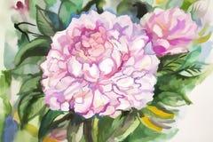Красивые розовые и белые пионы Стоковые Изображения RF