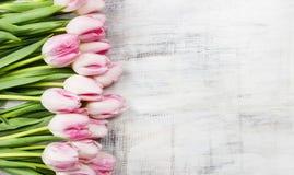 Красивые розовые и белые тюльпаны на деревянной предпосылке Стоковая Фотография