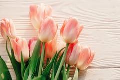 Красивые розовые тюльпаны на белой деревенской деревянной предпосылке предложение Стоковая Фотография RF