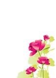 Красивые розовые цветки, акварель, изолированная на белизне Стоковое фото RF