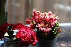 Красивые розовые цветки используемые для украшения Стоковые Изображения