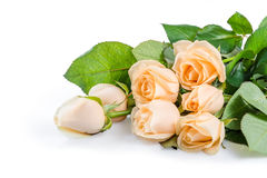 Красивые розовые цветки 03 Стоковая Фотография