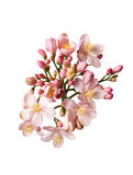 Красивые розовые цветки bouguet Стоковые Фотографии RF