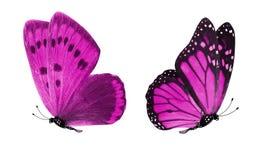 Красивые 2 розовых бабочки изолированной на белой предпосылке стоковое изображение rf