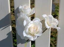 Красивые розы зацветая весной против белизны покрасили переднюю загородку Стоковая Фотография