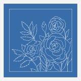 Красивые розы изолированные на голубой предпосылке Нарисованная рукой иллюстрация вектора Стоковые Изображения