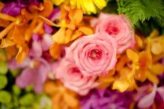 Красивые розы как предпосылка Стоковое Изображение RF