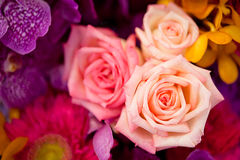 Красивые розы как предпосылка Стоковые Изображения