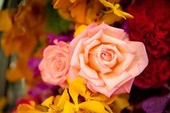 Красивые розы как предпосылка Стоковые Изображения RF