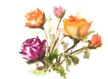 Красивые розы, картина акварели Стоковое фото RF