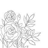 Красивые розы на белой предпосылке вычерченный вектор руки Стоковые Фотографии RF